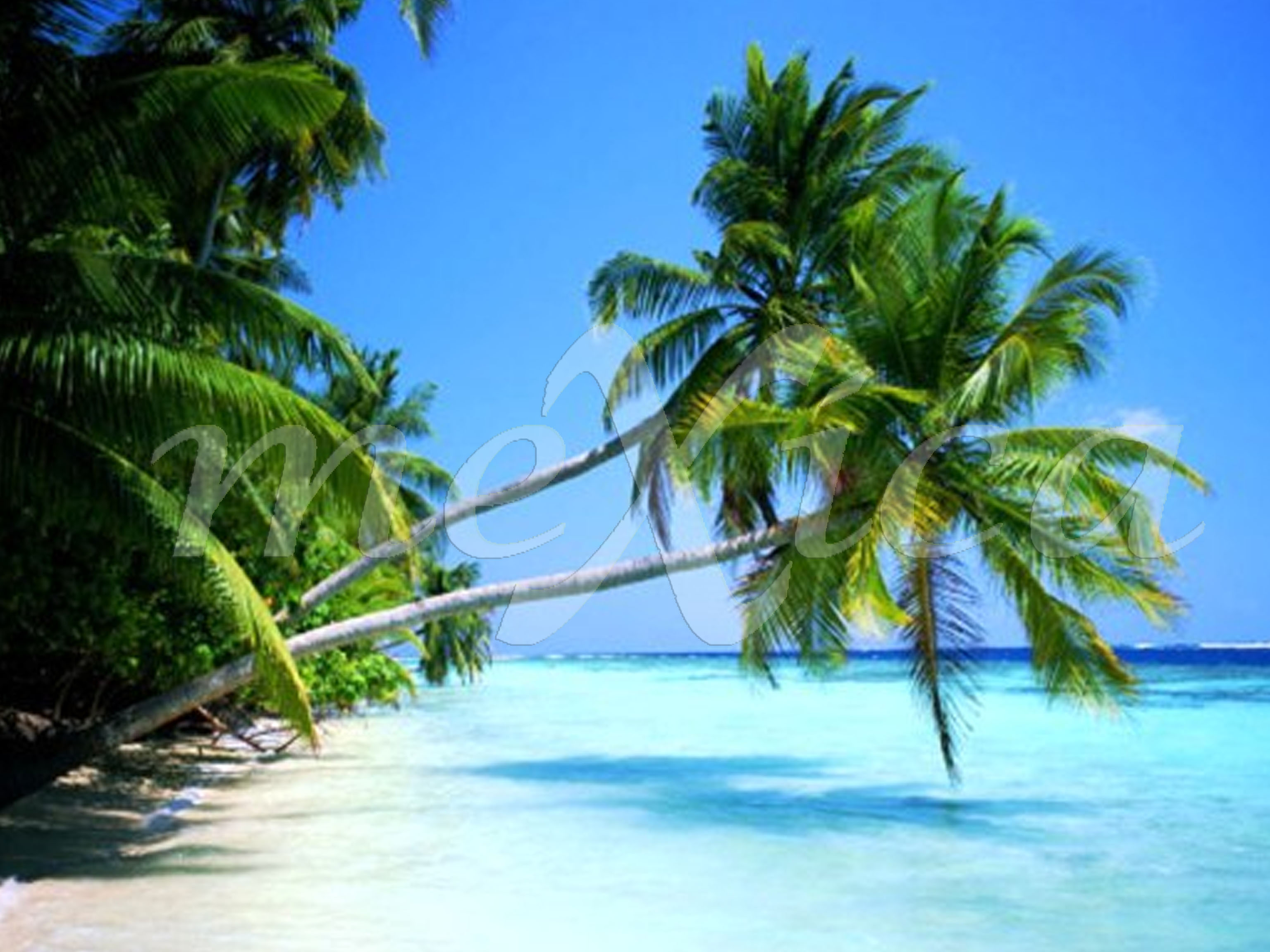 Фото отдыхающих в доминиканой 3